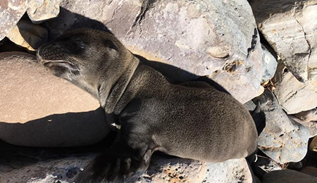 Seal Laying on the Rocks